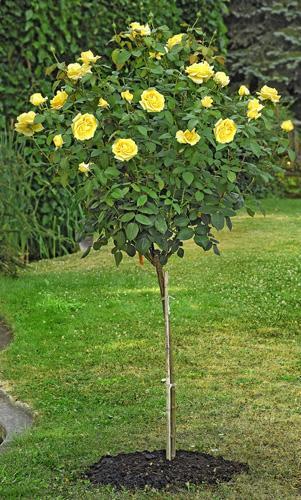 Cat gorie plante dext rieur page 2 du guide et comparateur for Plante 60 80