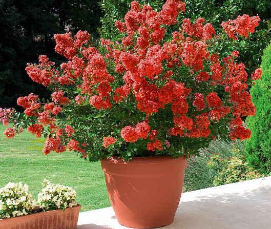 Cat gorie plante dext rieur page 3 du guide et comparateur for Caoutchouc plante exterieur