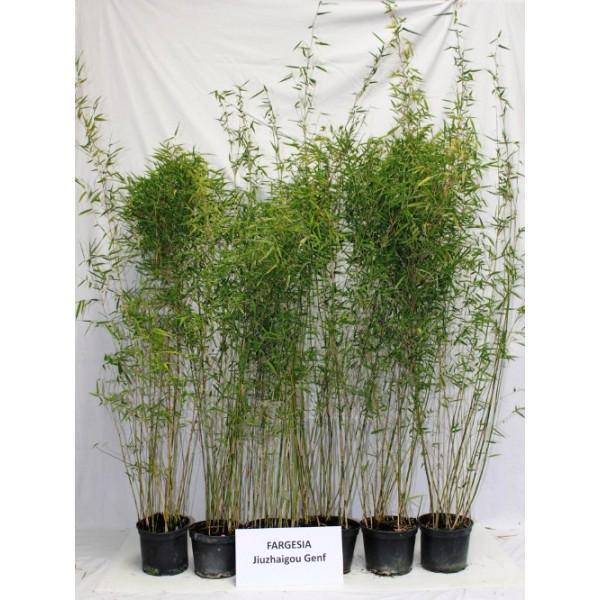 Cat gorie plante dext rieur du guide et comparateur d 39 achat for Plante 60 80