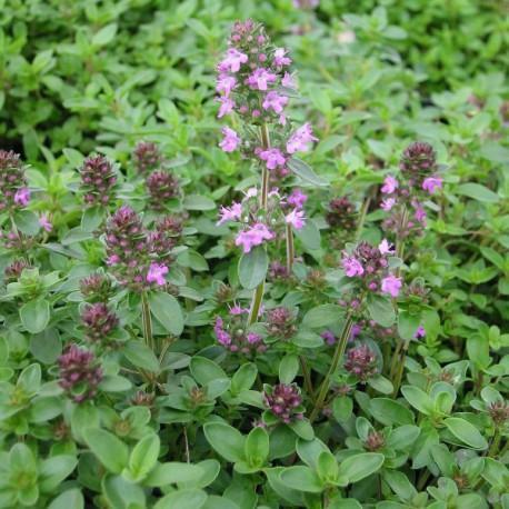 Catgorie plante dextrieur du guide et comparateur d 39 achat for Achat plante jardin