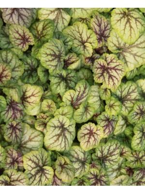 Cat gorie plante dext rieur page 3 du guide et comparateur for Plante exterieur toute saison