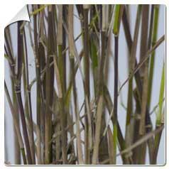Catgorie plante dextrieur du guide et comparateur d 39 achat for Caoutchouc plante exterieur