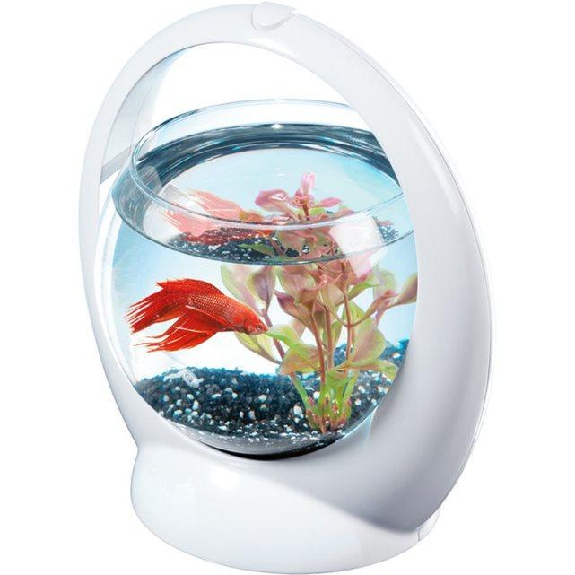 Zolux c aquarium boule design poisson combattant for Aquarium zolux