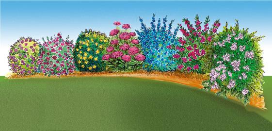 Cat gorie arbre et buisson page 2 du guide et comparateur for Arbre buisson pour jardin