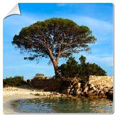 catgorie arbre et buisson page 1 du guide et comparateur d 39 achat. Black Bedroom Furniture Sets. Home Design Ideas