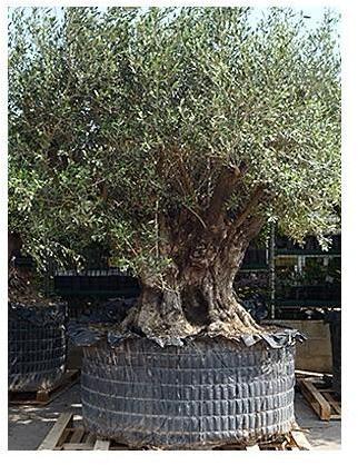Catgorie plante dextrieur page 1 du guide et comparateur d for Achat plante jardin