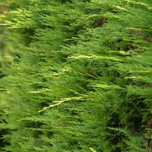 Catgorie plante dextrieur du guide et comparateur d 39 achat for Plante 60 80
