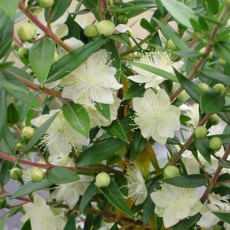 Catgorie plante dextrieur page 3 du guide et comparateur d for Caoutchouc plante exterieur