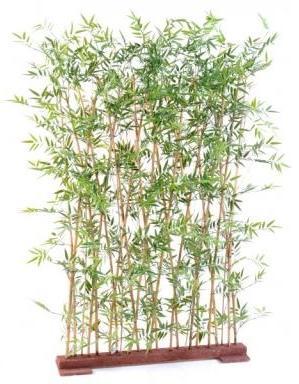 Catgorie plante dextrieur page 1 du guide et comparateur d for Plante bambou exterieur