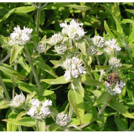 Catgorie plante dextrieur page 3 du guide et comparateur d for Plante 60 80